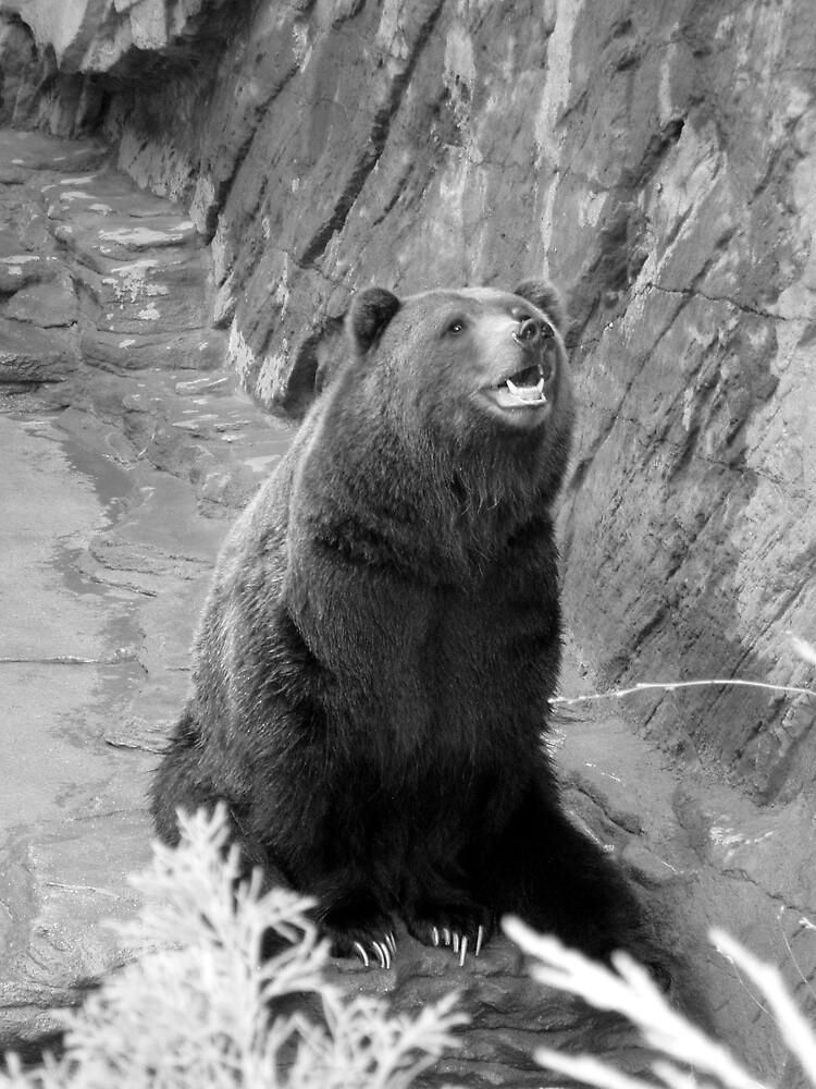 Brown Bear by Maria  Palumbo