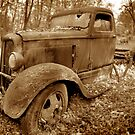 Out to pasture... by Scott White