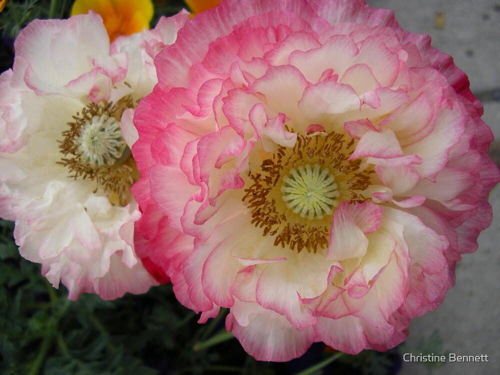 Ranunculus by Christine Bennett