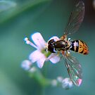 Balancing on Baby's Breath by Gayle Dolinger