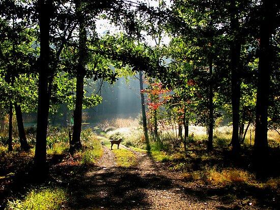 Morning Has Broken by NatureGreeting Cards ©ccwri