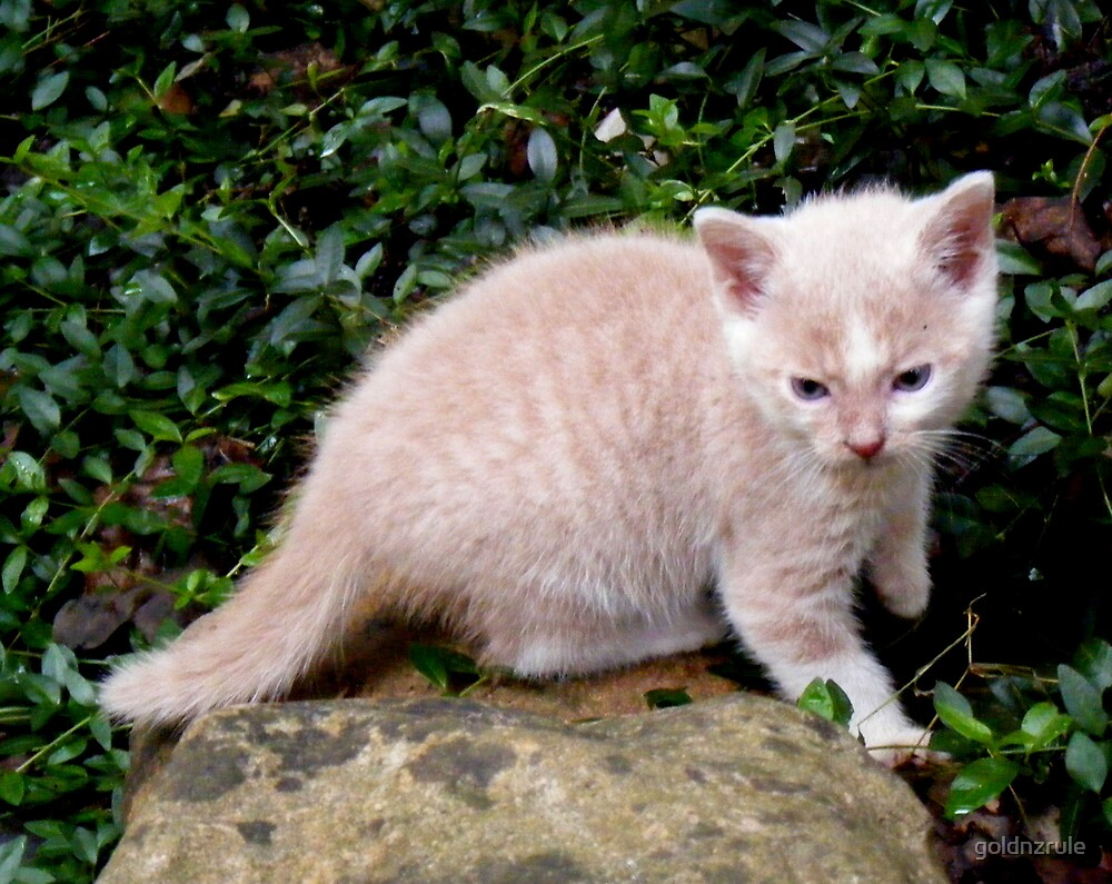 Wild Bill Kitten first outside adventures by goldnzrule