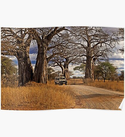 Under the giant Baobabs Poster