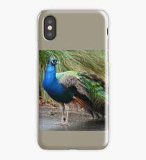 Peacock, Cataract Gorge iPhone Case/Skin