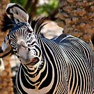 Crazy Stripes by Sue  Cullumber