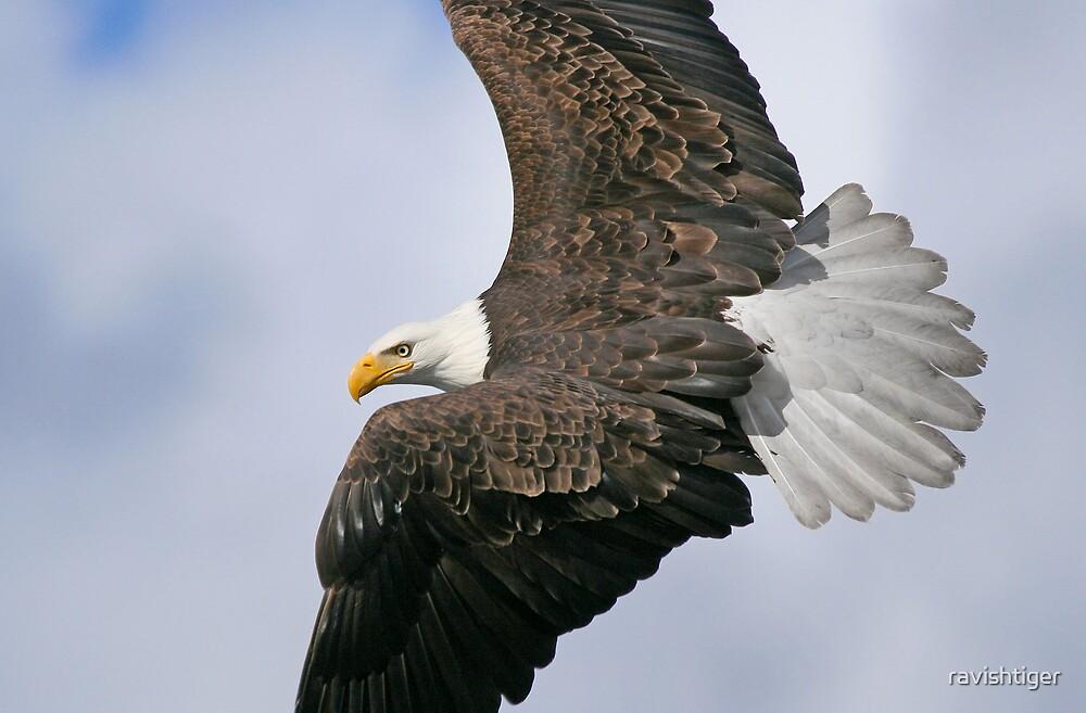 Flight by ravishtiger
