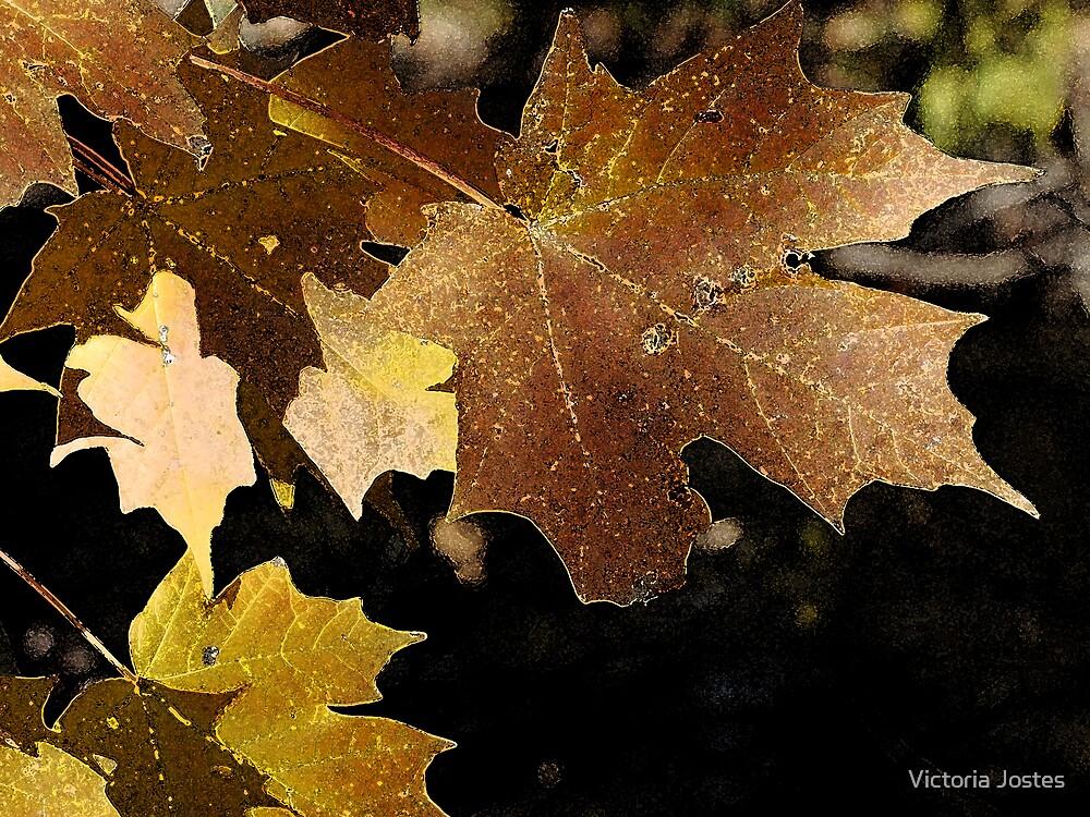 Autumn Color by Victoria Jostes
