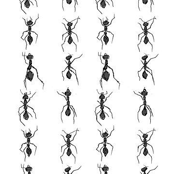 ANTS by niamhkerins