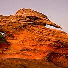 Petrified Kookaburra Rock by robertb