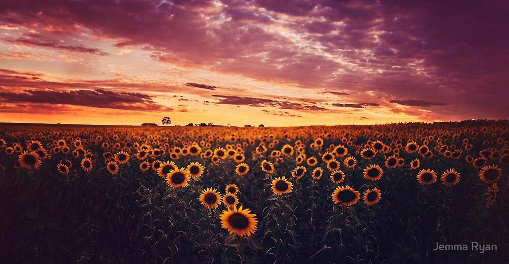 Sunset Sunflowers #2 by Jemma Ryan