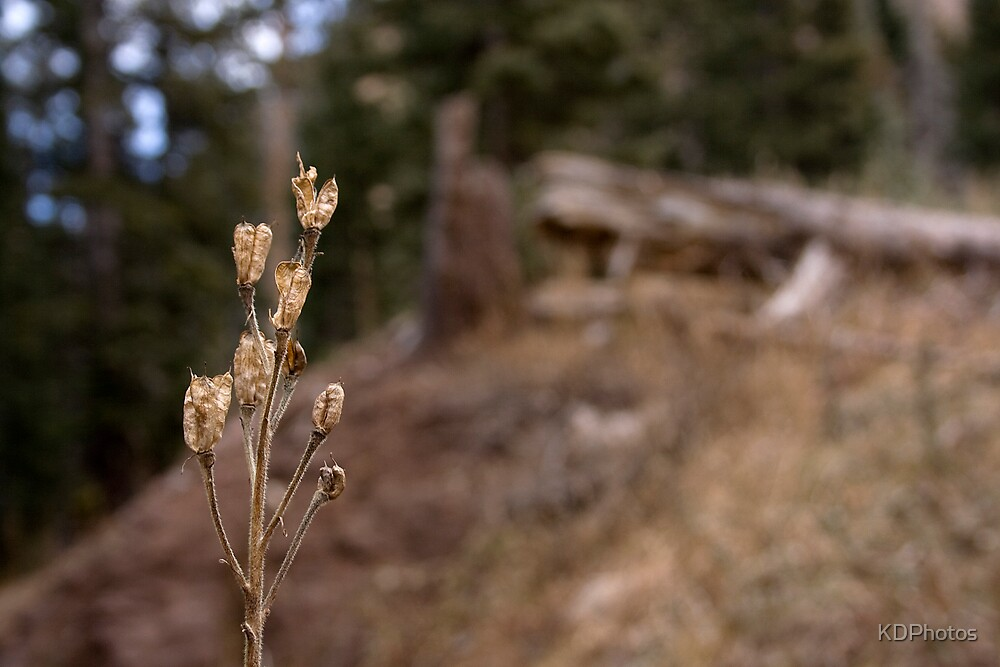 Fall Weed by KDPhotos
