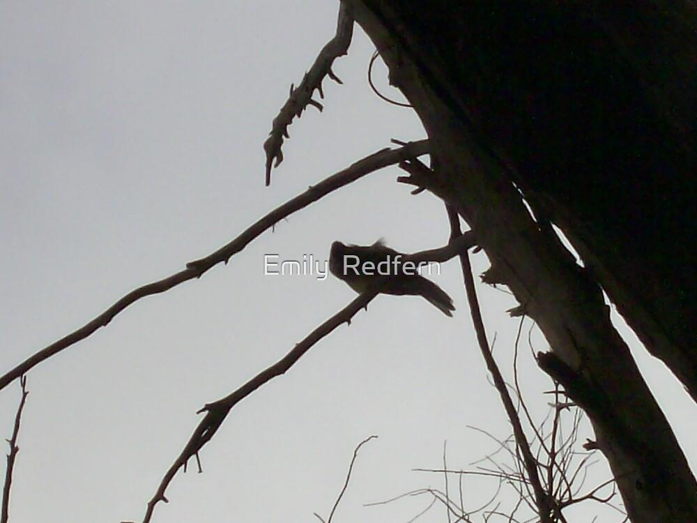 Honey Eater In Tree. by Emily  Redfern
