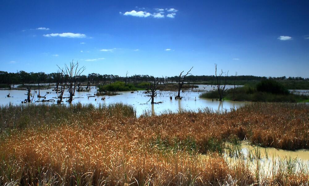 Wetlands by Jackal