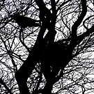 CROWS NEST SILHOUETTE by NICK COBURN PHILLIPS