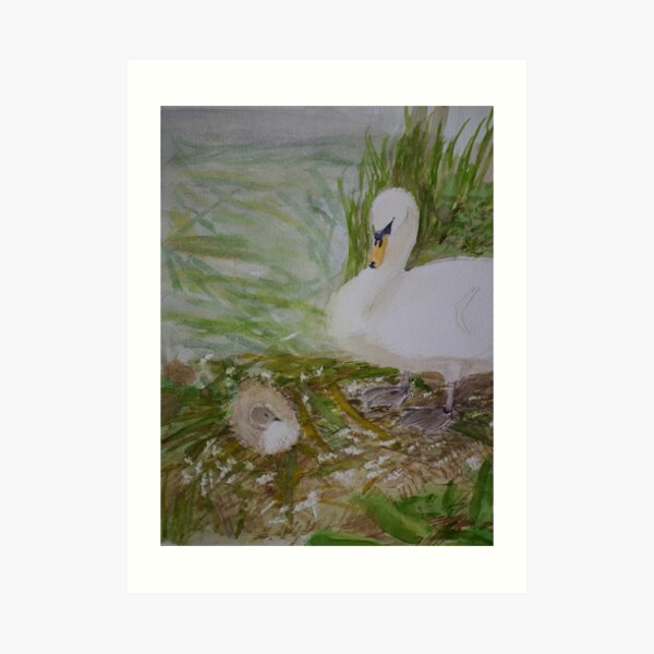Swan and Cygnet Art Print