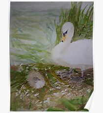 Swan and Cygnet Poster