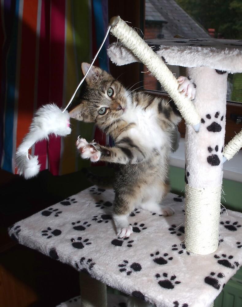 Gang kitten by turniptowers