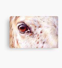 White horse close-up Canvas Print