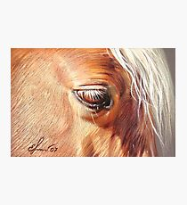 Palomino close-up Photographic Print