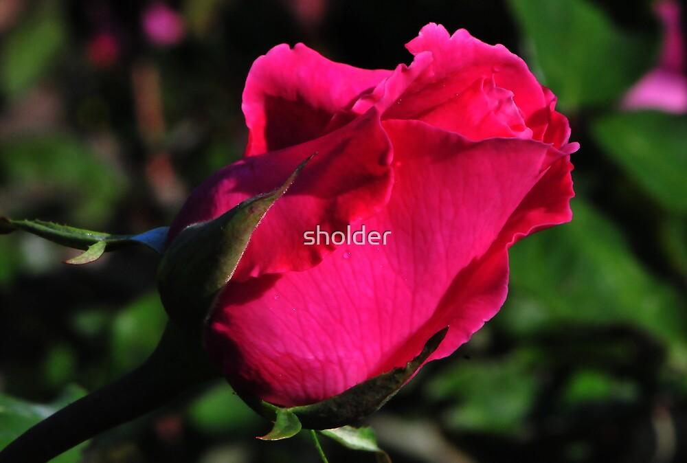 Crimson Rose by sholder