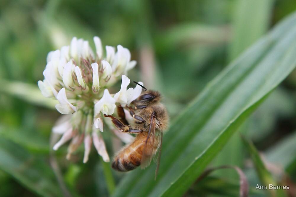 Bee by Ann Barnes