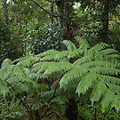 Hawaiian Rain Forest by photosbyflood