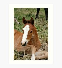 Glory's foal Art Print