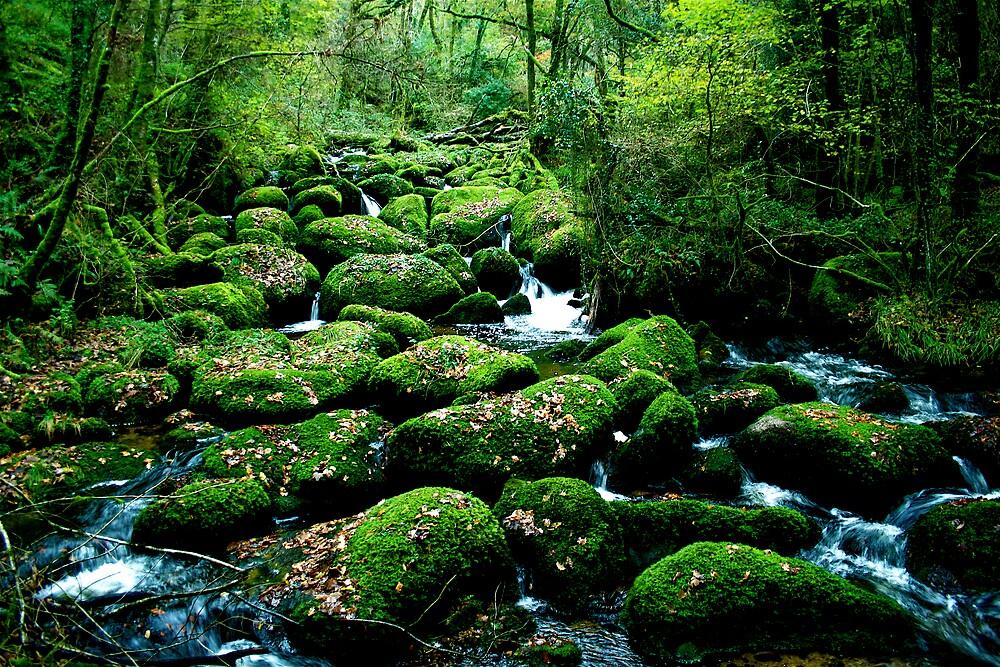 Green rocks, Becky Falls, Dartmoor by Amanda Gazidis