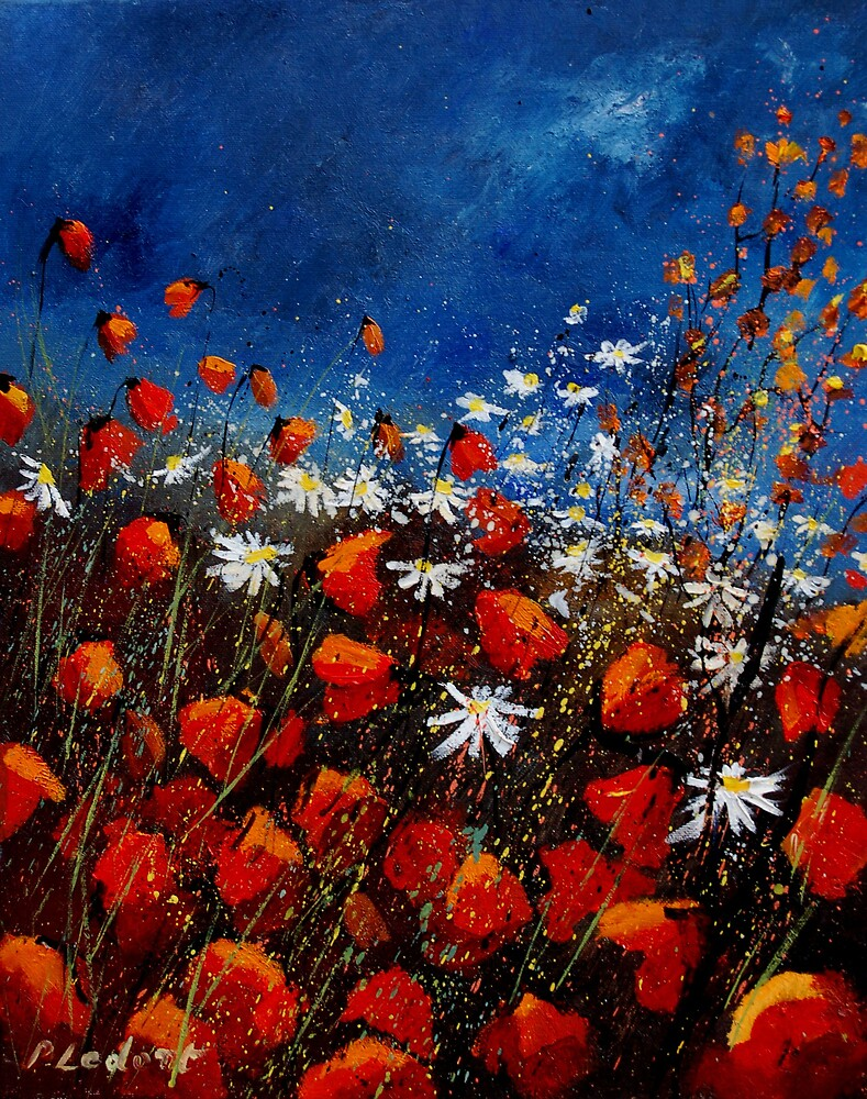 red poppies 451108 by calimero