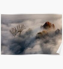 Trees in the morning mist Poster