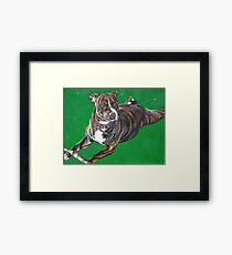 'Chaos' - The Staffordshire Bull Terrier Framed Print