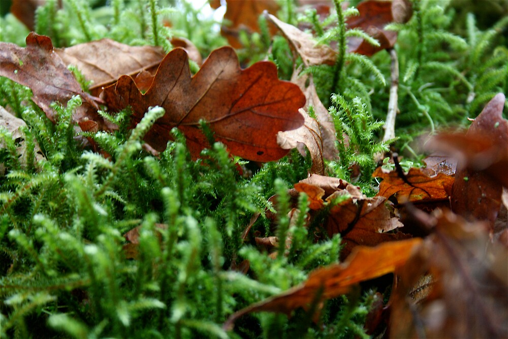 Oak leaf on moss by Amanda Gazidis
