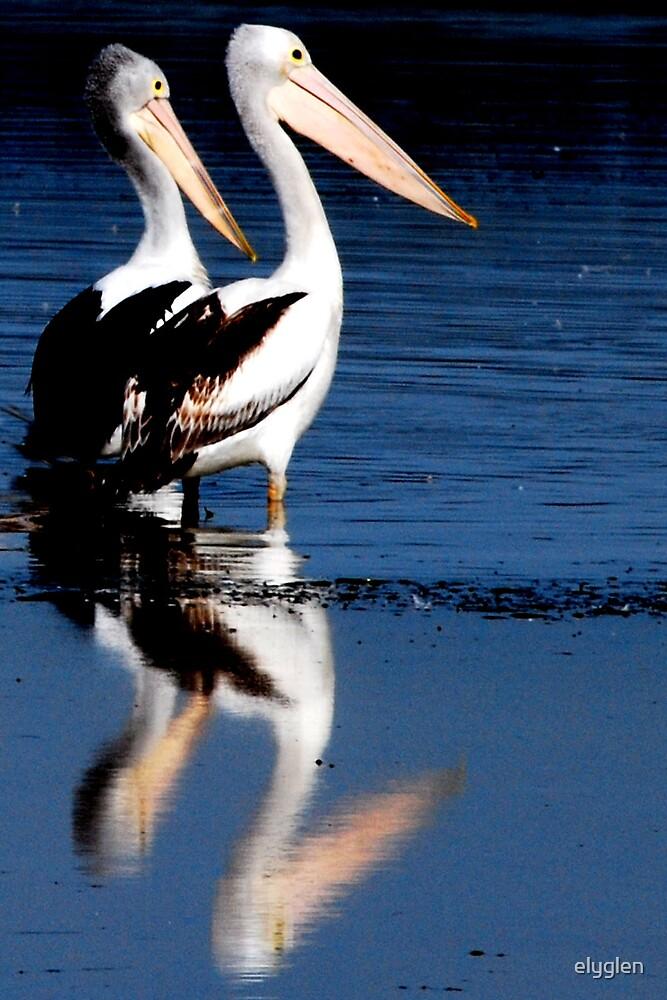 Pelicans by elyglen
