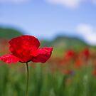 Poppy by Karen Havenaar