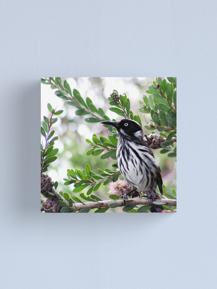 Alternate view of New Holland Honey Eater Canvas Print
