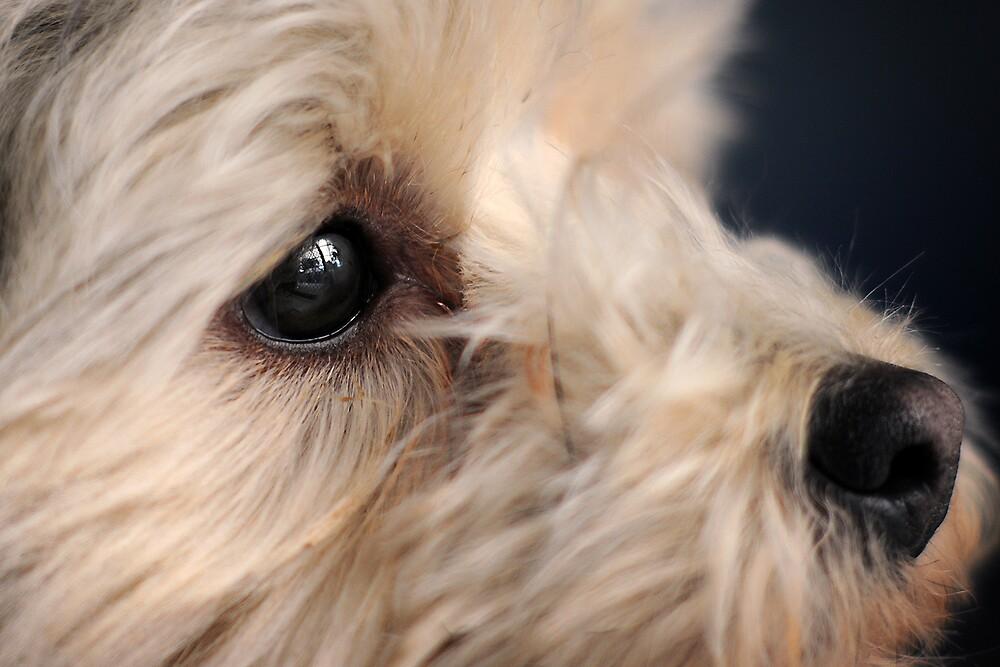 Dog by Jonathan Dael