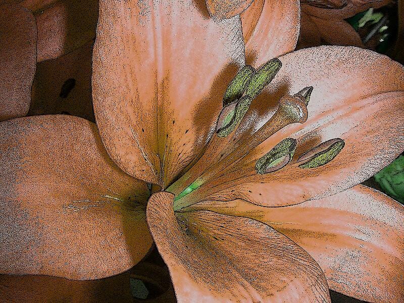 Lillium. by cieloverde
