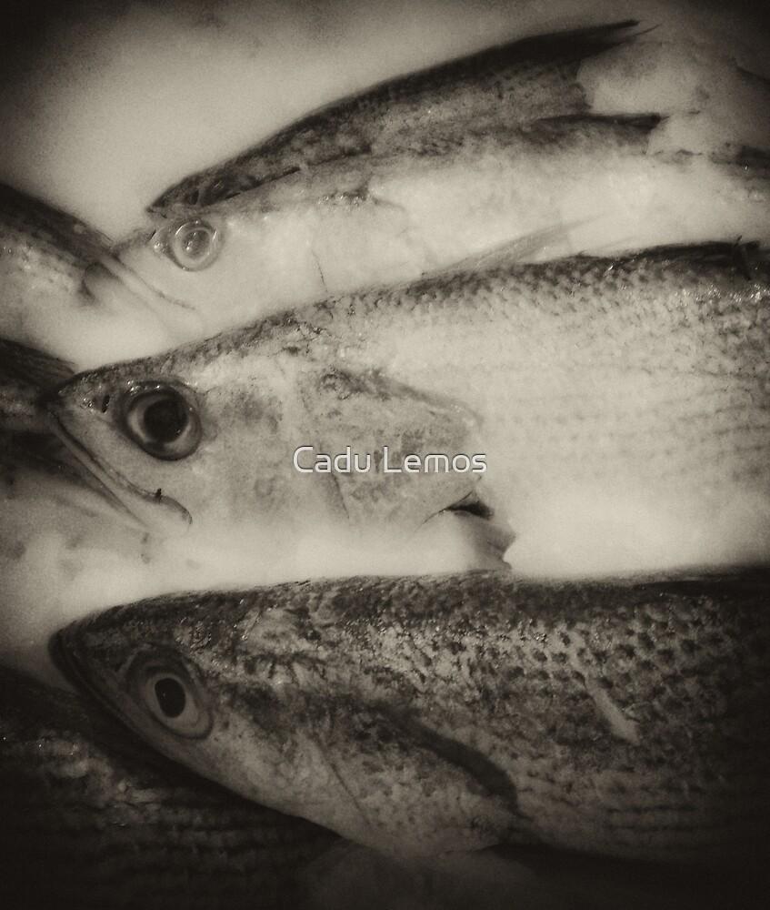 fish eye mono by Cadu Lemos