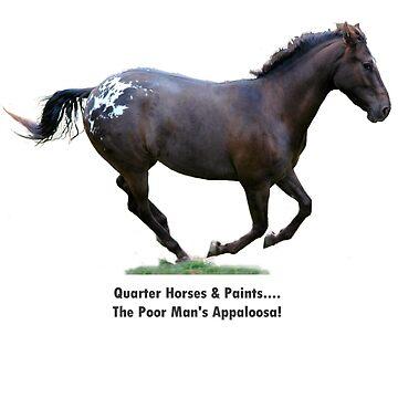 Quarter Horses & Paints....The Poor Man's Appaloosa!  by paintpony