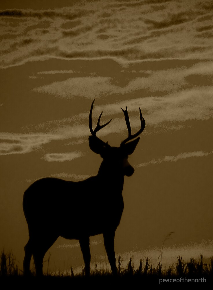 Buck by peaceofthenorth