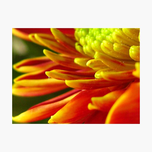 Autumn Flower 1 Photographic Print