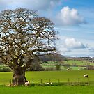 Peak District Tree by Dave Hare