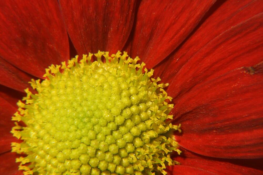 30% Flower, 100% Macro by Dolf