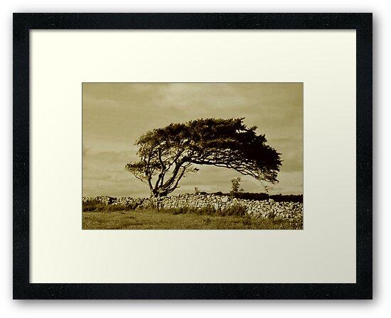 lonely tree by Tjb62