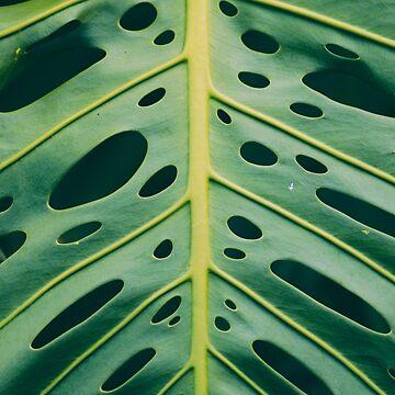 Hawaiian Paterns by GlideMedia
