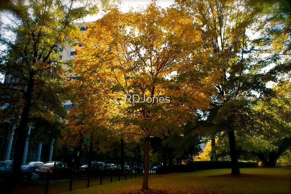 Fall Tree 1 by RDJones