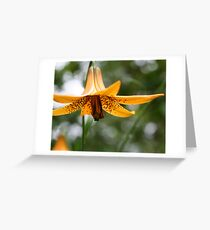 Spotted Wild Lily Greeting Card
