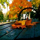 Fall Bench by RDJones