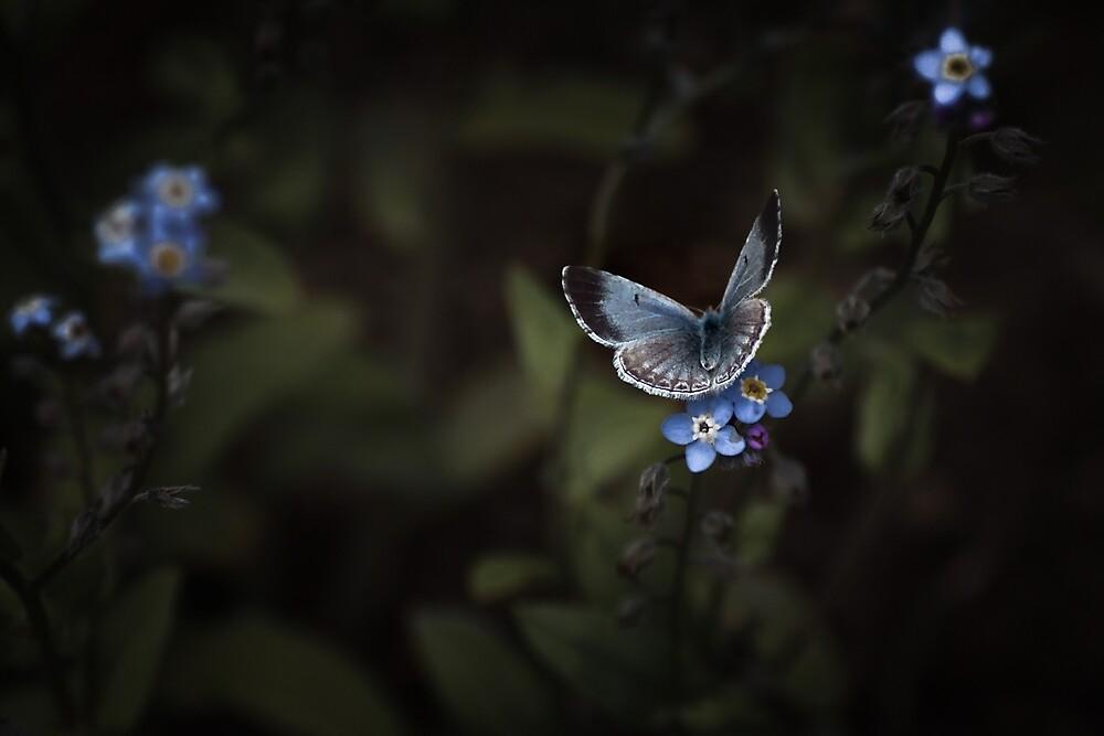 MOONLIT BUTTERFLY by Sandy Hill