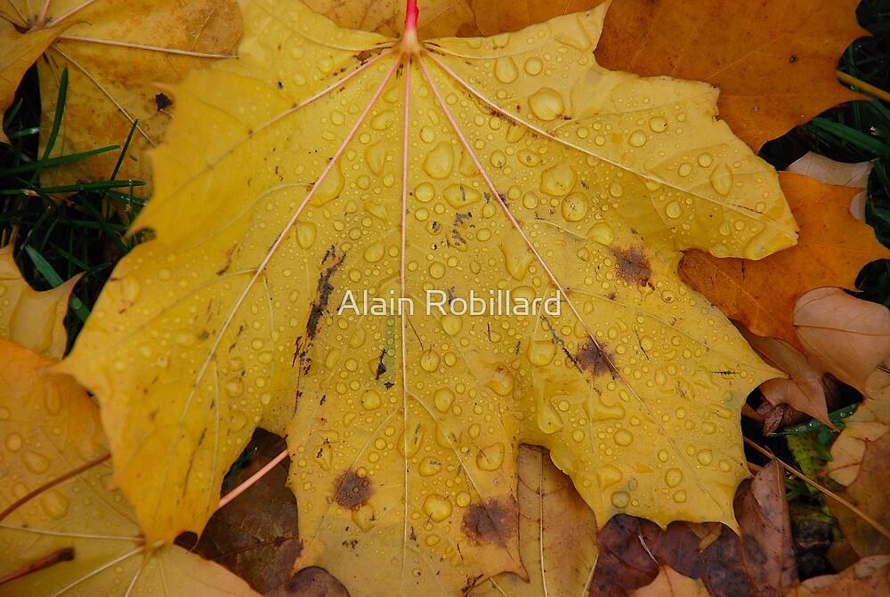 Wet leaf by Alain Robillard